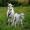 Козы c молодыми козлятами #1391737
