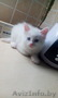 Котёнок,  добрый и ласковый!